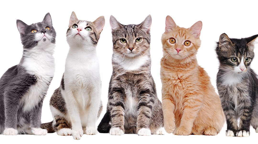 Find Out Why Cats Are Humans Best Friend Livestoc Blog